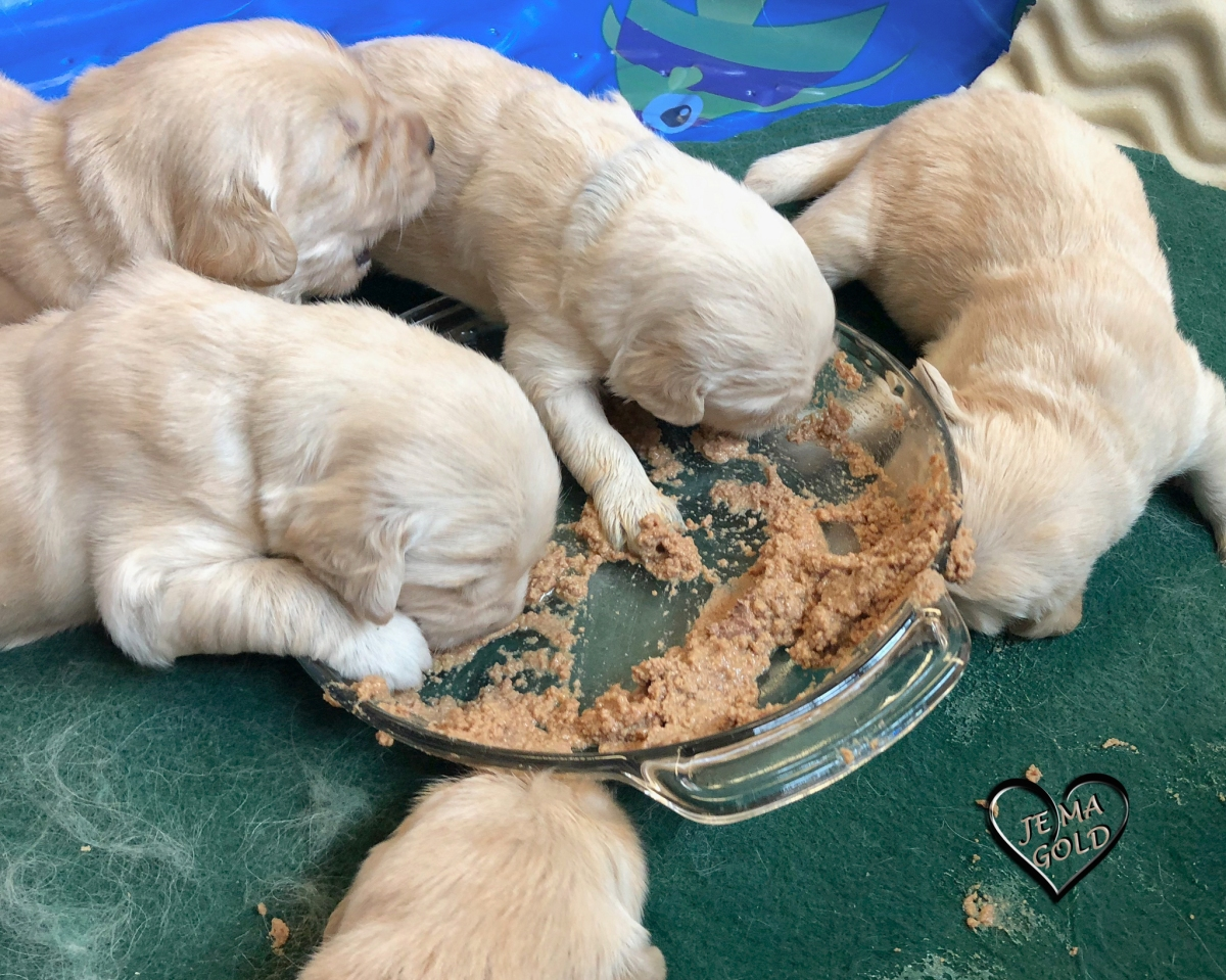 Puppies Learning ToEat…