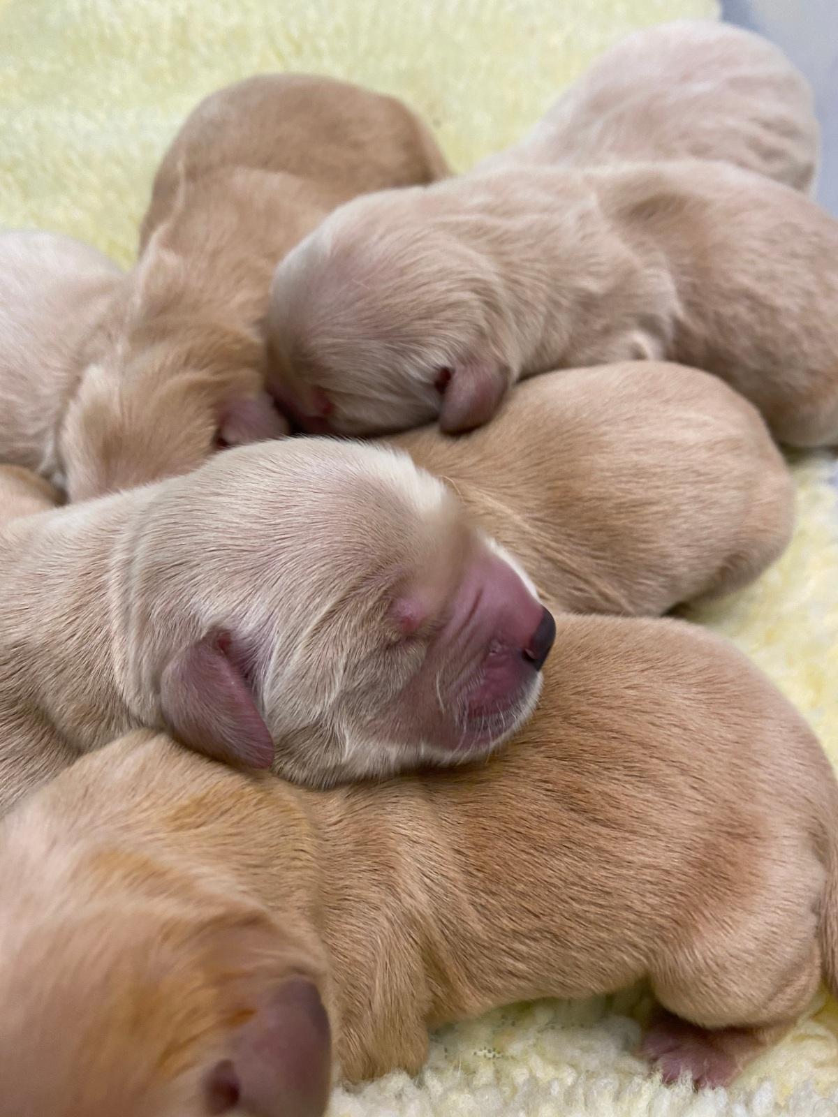 Deja's Puppies HaveArrived!